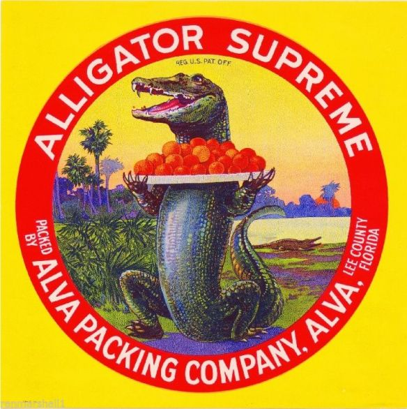 collectibles from the past    Alligator Supreme Fruit Crate Label    collectible    vintage collectibles