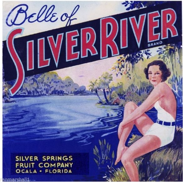 collectibles from the past   Belle of Silver River Fruit Crate Label     collectible    vintage collectibles