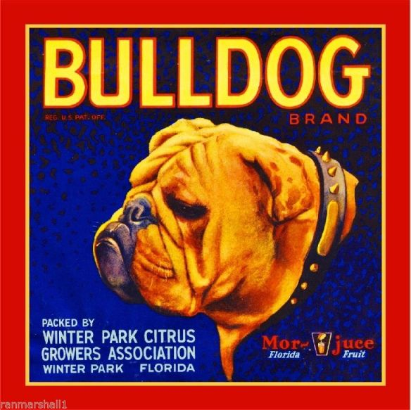 collectibles from the past    Bulldog Fruit Crate Label     collectible    vintage collectibles