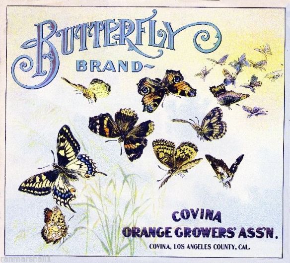 collectibles from the past     Butterfly Fruit Crate Label     collectible    vintage collectible