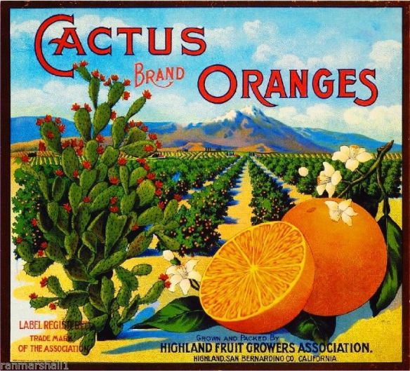 collectibles from the past    Cactus Fruit Crate Label    collectible    vintage collectibles