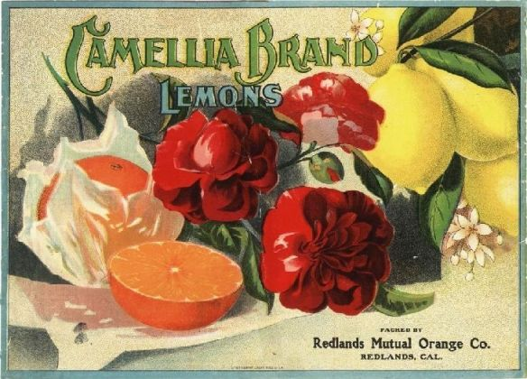 collectibles from the past    Camellia Fruit Crate Label     collectible    vintage collectibles